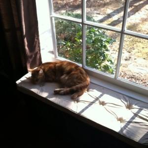 Oliver's New Spot