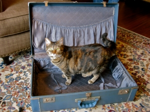 Miss Penny modeling the larger suitcase!