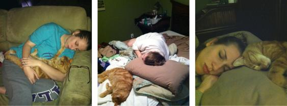 Pregnant ladies take lots of cat naps.