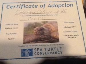 Our adopted sea turtle!